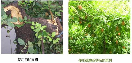 果树用硫酸亚铁