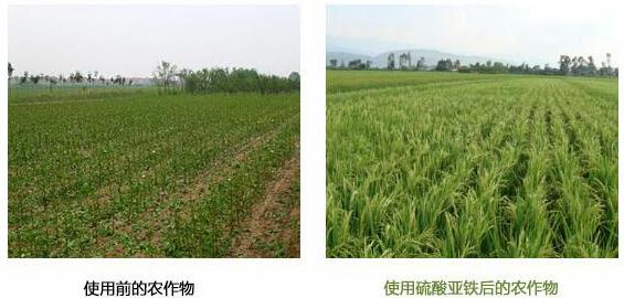 农作物硫酸亚铁